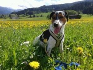 Heidi in Austria