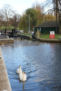 The locks, although the Marina's on the right fork of the river