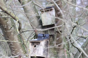 So many nesting boxes in this reserve