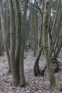 Interesting tree shapes