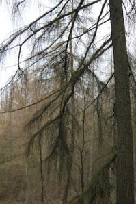 Fabulous trees...