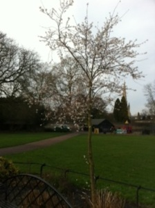 Blossom in January?