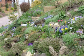 Stunning spring rockery on the right up here