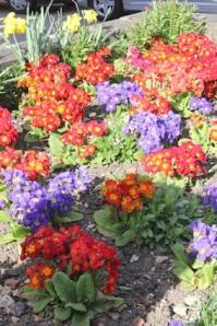 Nice floral displays up here