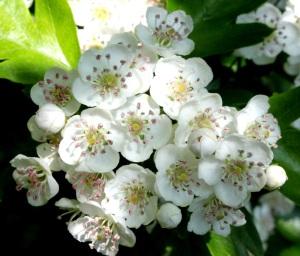 Blossom's still blooming!
