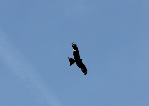 We were followed by a Red Kite along here - note the missing feather