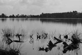 Black & white view
