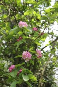 Plenty of blossom still in abundance