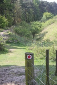 The path's well marked