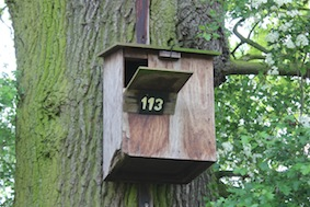 Many owl boxes along here