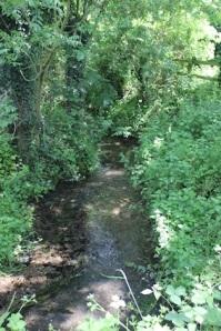 Pretty, clean stream