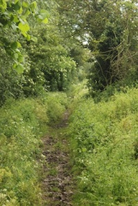 But it soon becomes overgrown & very muddy (more stinging nettles)
