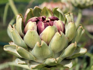 Artichokes…airfreshner time ;-)