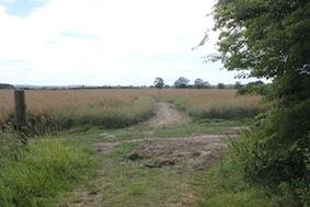 Across the next field