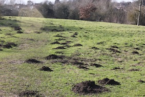 Think they need a mole-catcher!