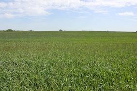 Grass, grass everywhere