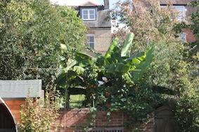 Is that a banana tree - I thin it might be!