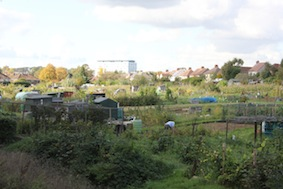 Fine allotments along here